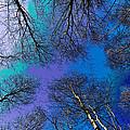 Epping Forest Art by David Pyatt