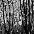 Epping Forest by David Pyatt