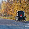 Fall Buggy by David Arment