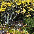 Fall Color Highland Scenic Highway by Thomas R Fletcher