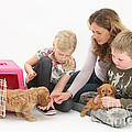 Family With Cockerpoo Pups by Mark Taylor