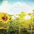 Field Of Colorful Sunflowers And Blue Sky  by Sandra Cunningham