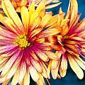 Flower by Holger Graebner
