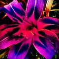 Flower by Katie Williams