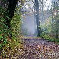 Foggy Road by Mats Silvan