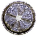Fossil Diatom, Light Micrograph by Frank Fox
