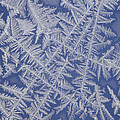 Frost On A Window by Ted Kinsman