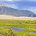 Great Sand Dunes Bison by Scotts Scapes