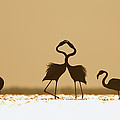 Greater Flamingo Phoenicopterus Ruber by Konrad Wothe