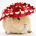 Guinea Pig Wearing A Hat by Mark Taylor