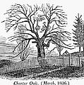 Hartford: Charter Oak by Granger