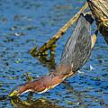Heron Strike by Brian Stevens
