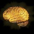 Human Brain, Artwork by Claus Lunau