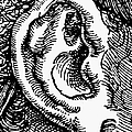 Human Ear by Granger