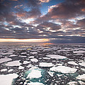 Ice Floes At Sunset Near Mertz Glacier by Colin Monteath