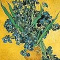 Irises by Sumit Mehndiratta