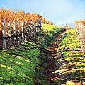 Late Autumn In Napa Valley by Ellen Cotton