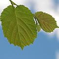 Leaf by Design Windmill