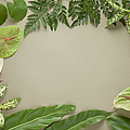 Leaves Frame by sozaijiten/Datacraft