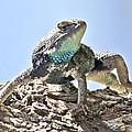 Lizard by Na Johnson