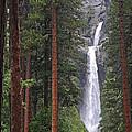Lower Yosemite Falls by Lynn Bauer