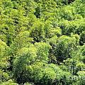 Lush Bamboo Forest by Yali Shi