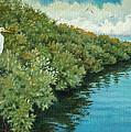 Mangroves 2 by Charles Yates