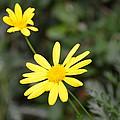 Mellow Yellow by Debbi Granruth