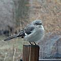 Mockingbird by Ericamaxine Price