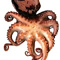 Octopus by Victor Habbick Visions
