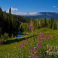 Ohio Creek Valley Colorado by Crystal Garner