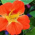 Orange Delight by Bruce Bley