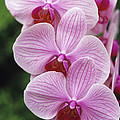 Orchid Flowers by Duncan Smith