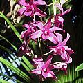Orchid by Giorgio
