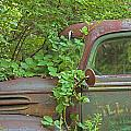 Overgrown Rusty Ford Pickup Truck by John Stephens