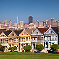 Painted Ladies by Brian Jannsen