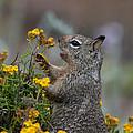 Point Lobos Park  by Carol Ailles