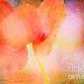 Poppy by Kim Fearheiley
