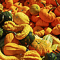 Pumpkins And Gourds by Elena Elisseeva