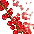 Red Christmas Berries by Elena Elisseeva