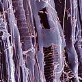 Rotten Wood, Sem by Dr Jeremy Burgess