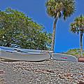 Sarasota Bayfront  by Betsy Knapp