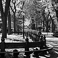 Scenes From Central Park by Rob Hans