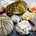 Sea Treasures by Elena Elisseeva