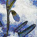 Snowdrop by Odon Czintos