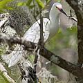 Snowy Egret by Patrick M Lynch