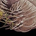 Spider Spinneret, Sem by Steve Gschmeissner