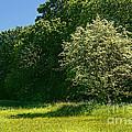 Sunny Meadow by Lutz Baar