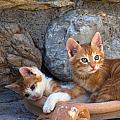 Sweet Cats by Manolis Tsantakis