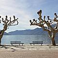 sycamore trees in Ascona - Ticino by Joana Kruse